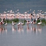 Flamingos can be seen
